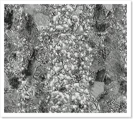 Bild.7 Cementit i ett band